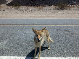 Death Valley is not dead — there are animals there!