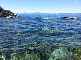 Water in Lake Tahoe is very clear.