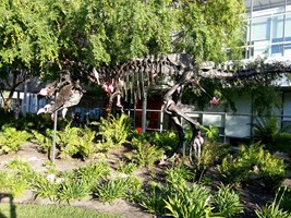 T-rex skeleton with a bunch of hanging flamingos on it in the center of Google campus.