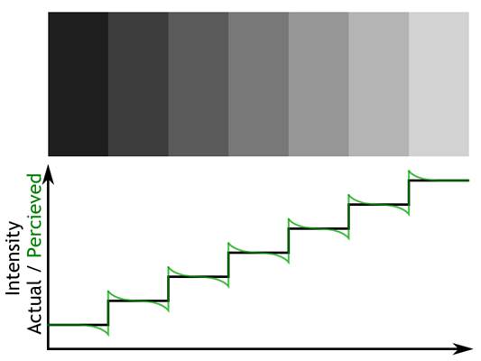 Mach Bands illusion. Each rectangle has solid color but it is perceived as a gradient because the edges are enhanced by human visual system.